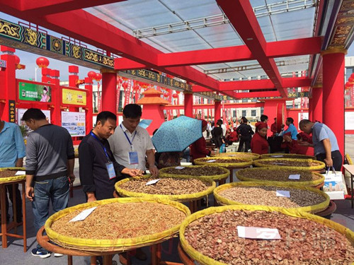 Chinese medicine plantation methods explored at demo bases